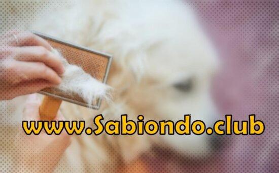por qué se cae el pelo a los perros