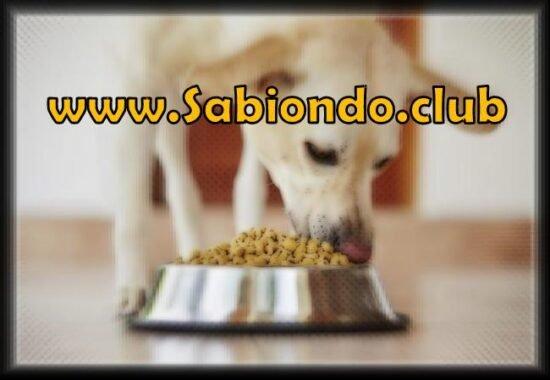 por qué se cae el pelo a los perros por alimentación